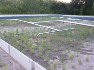 1er bassin en fonctionnement, 26 juin 2015